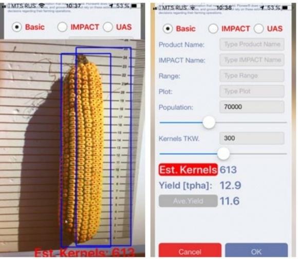 Українські фермери отримали можливість оцінити біологічну врожайність кукурудзи за допомогою мобільного телефону фото, ілюстрація