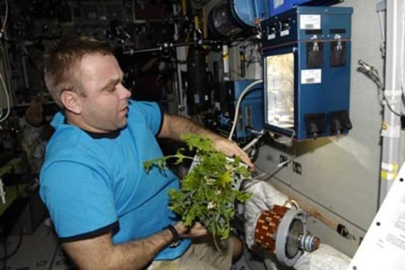 Ученые создали концепт оранжереи для разведения «сада-огорода» в космосе фото, иллюстрация