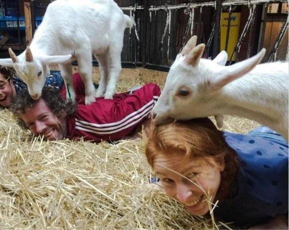 На нідерландських фермах можна зайнятися йогою з козами фото, ілюстрація