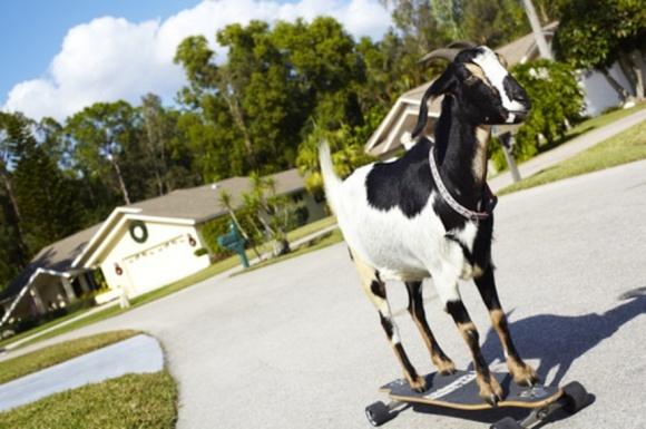 ТОП-10 необычных фермерских достижений в Книге рекордов Гиннесса фото, иллюстрация
