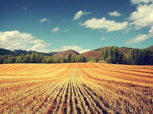 Мінекономіки розглядає можливість відстрочки платежів при покупці с/г земель, - Милованов фото, ілюстрація