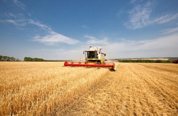 Валовий збір зернових у Криму в ц.р. скоротився майже в 2 рази фото, ілюстрація