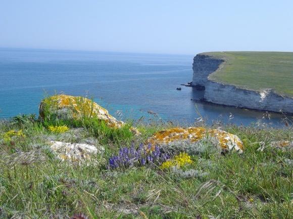 Росія використає землі окупованного Криму під вирощування трав для Китаю фото, ілюстрація