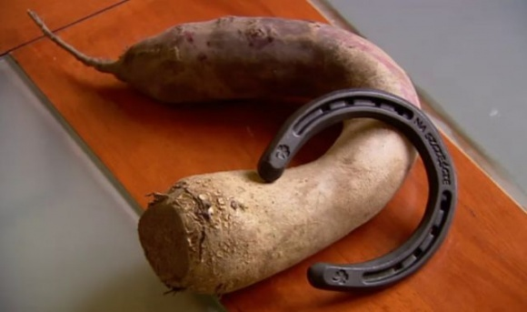 Польские фермеры подозревают, что из-за некачественных нидерландских семян у них выросла кривая свекла фото, иллюстрация