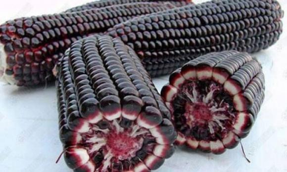 В Израиле намерены выращивать фиолетовую картошку и зерновые фото, иллюстрация
