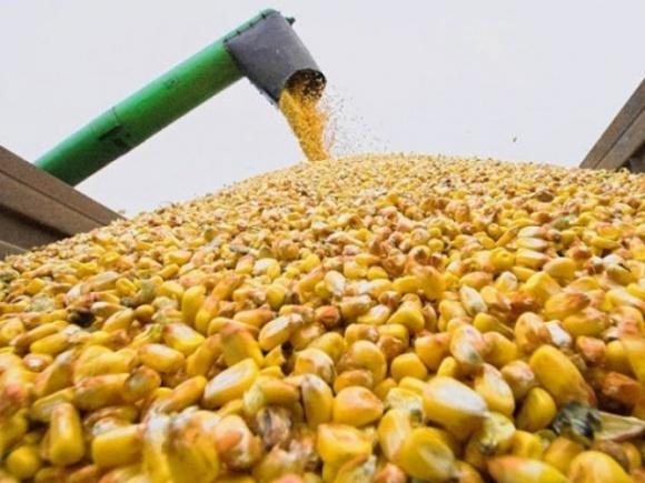 В основных странах-экспортерах и в ЕС площади под кукурузой увеличатся фото, иллюстрация