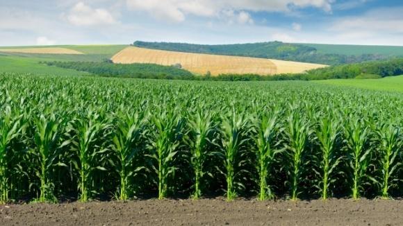 Стан посівів більшості сільськогосподарських культур в Україні добрий і задовільний фото, ілюстрація