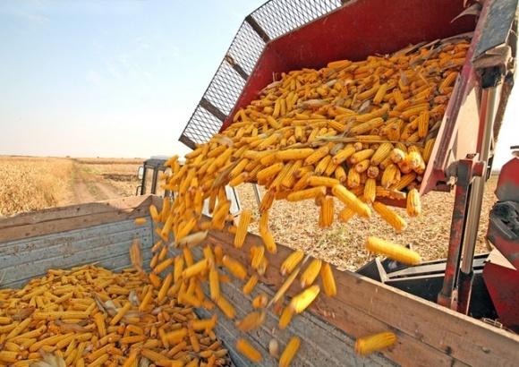 Україна несподівано експортує рекордну кількість кукурудзи фото, ілюстрація