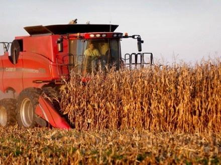 На Кіровоградщині знизилась якість збирання кукурудзи фото, ілюстрація