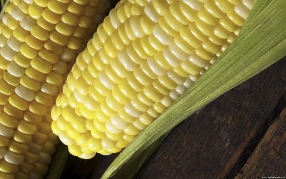Відтепер кукурудзу страхуватимуть від граду та лавини фото, ілюстрація