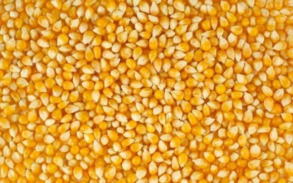 Румыния запретила экспорт пшеницы, кукурузы и сахара на время эпидемии фото, иллюстрация