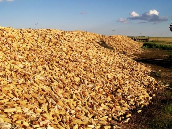 Китай не купуватиме українську кукурудзу - він позбавляється від своєї фото, ілюстрація