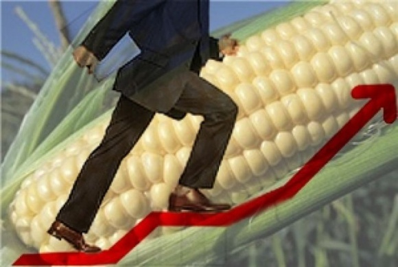 На рынке кукурузы наблюдается тенденция к повышению цен фото, иллюстрация