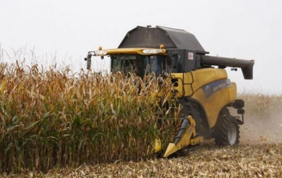 У 2017/18 МР урожай кукурудзи в Україні буде на 10% менше, ніж в минулому сезоні фото, ілюстрація