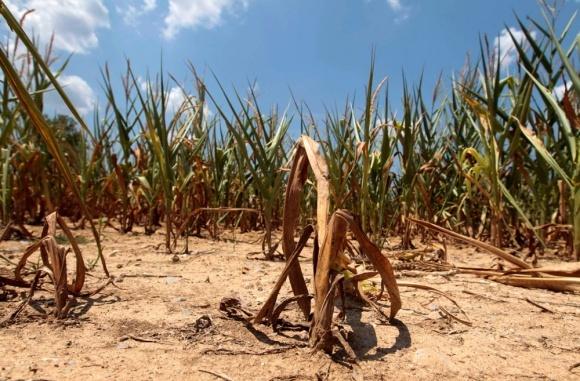Посіяна в квітні кукурудза в Бразилії під загрозою фото, ілюстрація