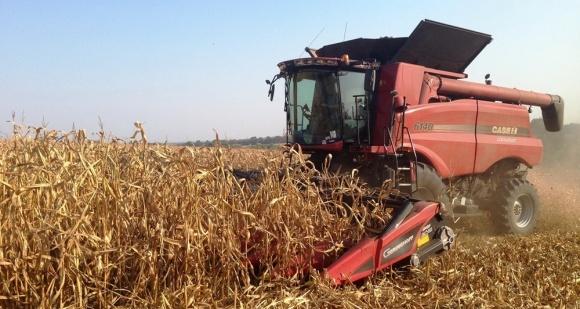 На Дніпропетровщині почалося збирання пізніх зернових фото, ілюстрація