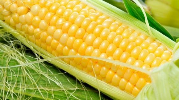 В «Гранит-Агро» урожайность «органики» выше, чем стандартного зерна фото, иллюстрация