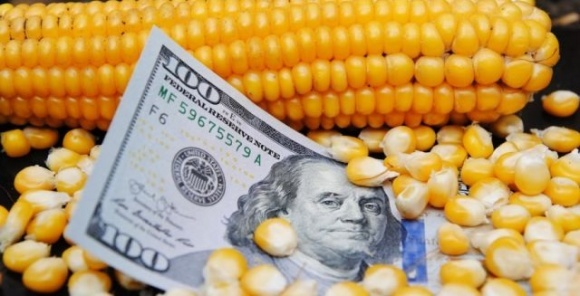 40% экспорта украинской кукурузы приходится на Китай, — АПК-Информ фото, иллюстрация