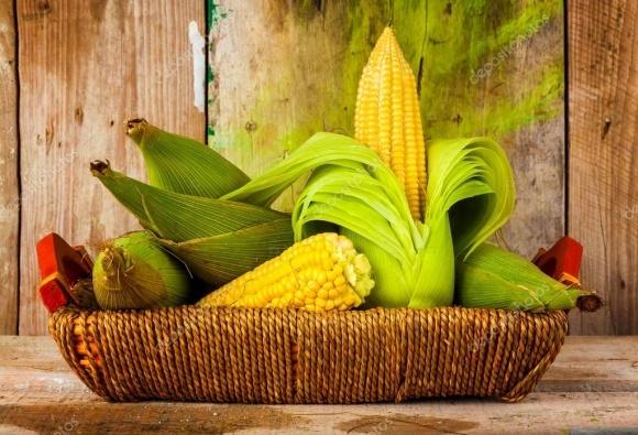 Bayer презентував новий протруйник для кукурудзи від нематод фото, ілюстрація