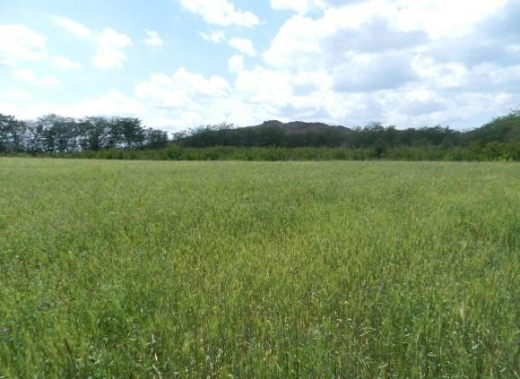 На Чернігівщині фермер розорав під кукурудзу археологічні пам'ятки вартістю два мільярди фото, ілюстрація