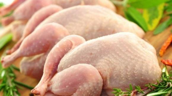 Український виробник курятини МХП став другим у Європі фото, иллюстрация