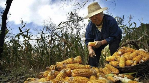 Китай заинтересован в наращивании поставок украинских зерновых и бобовых фото, иллюстрация