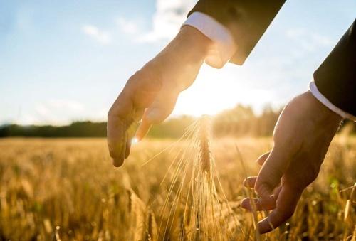 Ситуація на міжнародних зернових ринках у сезоні 2018-2019 років залишається збалансованою фото, ілюстрація