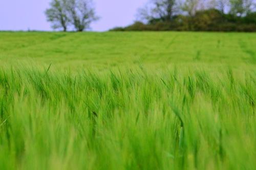 AgroGeneration продала активы в Сумской области стоимостью около €25 млн фото, иллюстрация