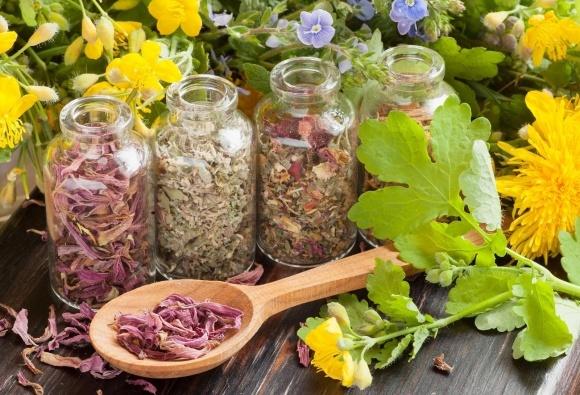 """""""Натуральные эссенции"""" ищет фермеров, умеющих выращивать лекарственные растения фото, иллюстрация"""