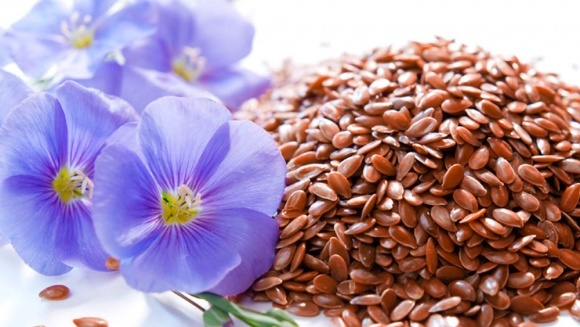 Технологія вирощування льону по-херсонськи фото, ілюстрація