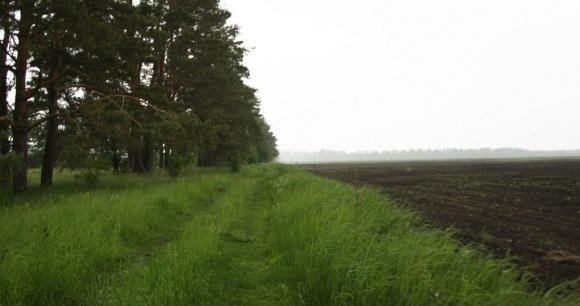В Донецькій області візьмуть на облік всі землі та лісосмуги фото, ілюстрація