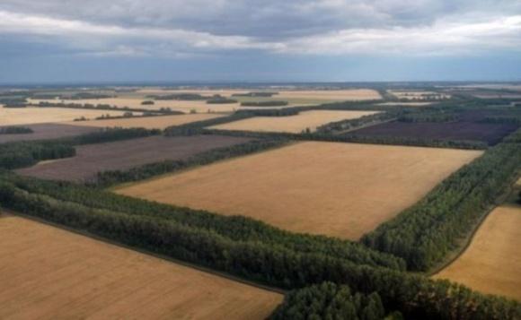 На Херсонщині почали відновлювати лісосмуги фото, ілюстрація