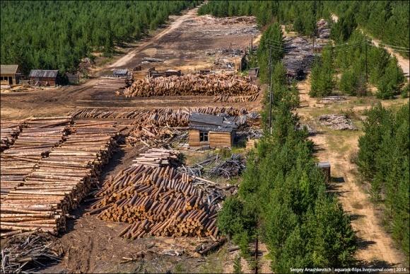Из Украины в Европу украли лес на 8 миллионов фото, иллюстрация