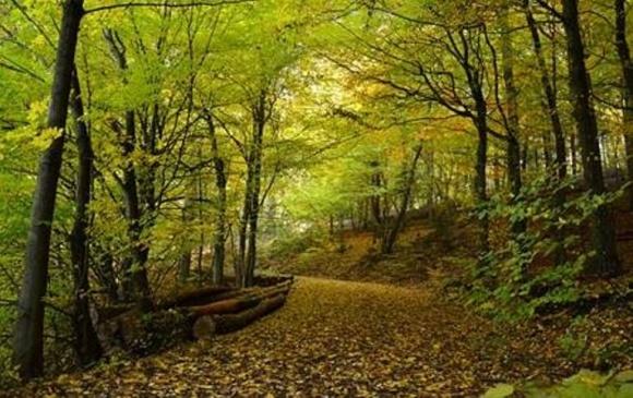 Німці вчитимуть нас як управляти лісами фото, ілюстрація