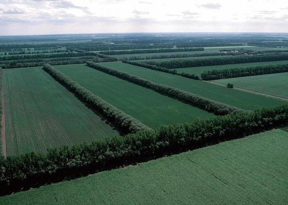 Мінекономіки розглядає можливість компенсації витрат за відновлення лісосмуг на сільгоспземлях фото, ілюстрація