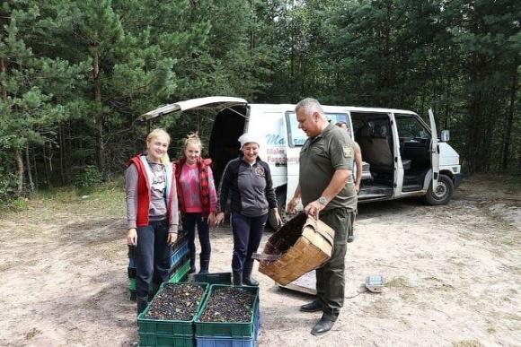 На Херсонщині встановлено рентну плату за збір лісових ресурсів  фото, ілюстрація