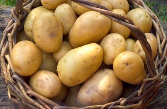 В Украине собрали 22 млн т картофеля фото, иллюстрация