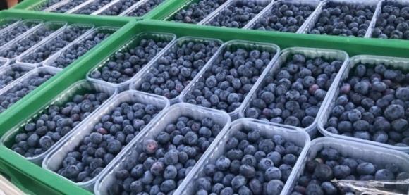 BigBlue Organic Blueberry Farm вже цього сезону вийде на ринок Скандинавії фото, ілюстрація
