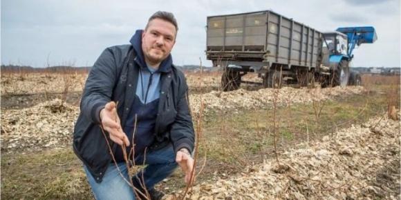 Ягоди на експорт: як українці заробляють на вирощуванні та продажі лохини  фото, ілюстрація