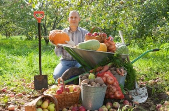Скільки в Україні особистих селянських господарств та яка їх спеціалізація? фото, ілюстрація