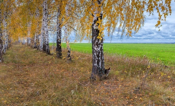 Проект «Лісосмуги життя» покликаний відновити лісосмуги в Україні фото, ілюстрація