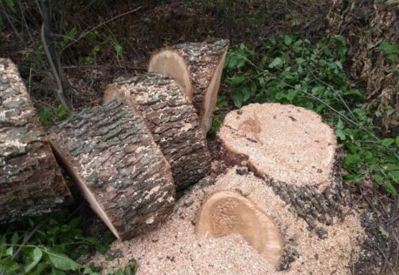 Битва за лесополосы: в Днепропетровской области фермеры восстали против лесорубов фото, иллюстрация