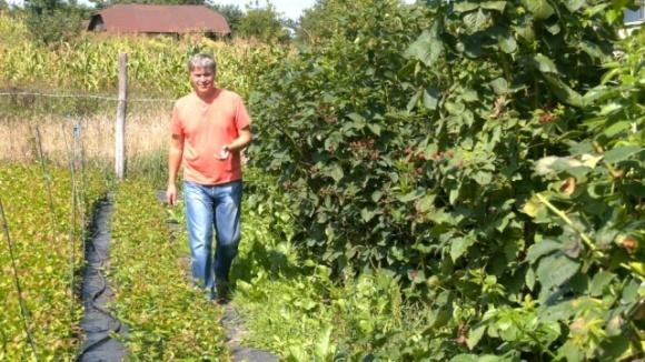 Как фермер из Луганщины выращивает саженцы голубики на Ивано-Франковщине  фото, иллюстрация