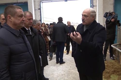 """Лукашенко звільнив Міністра сільського господарства та ще двох чиновників через """"обісраних корів"""" фото, ілюстрація"""