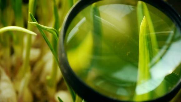 Агролайфхак: повышение качества обработки пестицидами и орошение по-израильски фото, иллюстрация