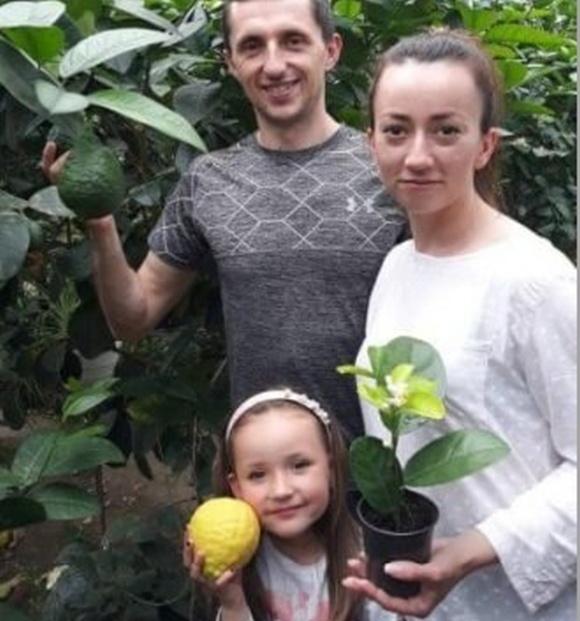 Вблизи Тернополя семья собирает урожаи лимонов, ананасов и бананов фото, иллюстрация