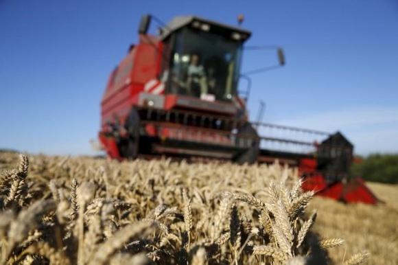 Проблемами аграріїв Прикарпаття стало сире неякісне зерно і непідготовлені до посіву поля фото, ілюстрація
