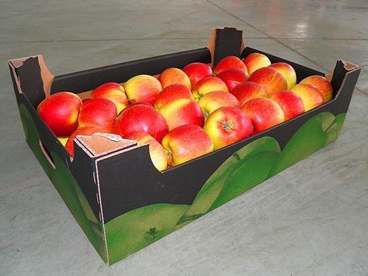 У Новій Зеландії розробили робота для пакування яблук фото, ілюстрація