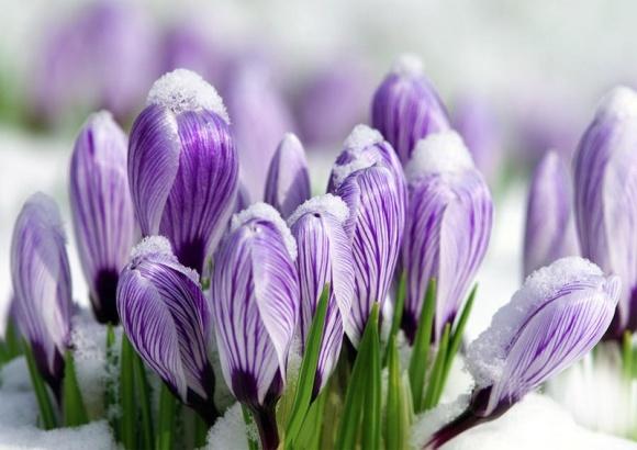 Поздравляем с весной, дорогие женщины! фото, иллюстрация