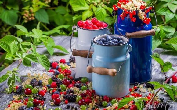 В Україні вигідно вирощувати смородину, ожину та агрус фото, ілюстрація
